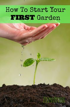 How To Start Your First Garden - Tips for first time gardeners on how to start your first garden and have a successful first year of gardening.