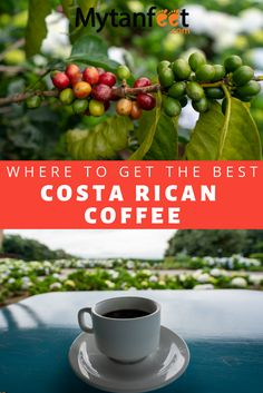 Learn about Costa Rica coffee and find out why it is so good. Find out the best Costa Rican coffee brands, the best Costa Rica coffee tours and more. Costa Rica With Kids, Living In Costa Rica, Tamarindo, Costa Rica Coffee, Costa Rican Food, Costa Rica Travel, Coffee Branding, Backpacking Tips, Beautiful Places To Visit