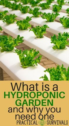 What is a hydroponic garden and why you need one #HydroponicsGardening