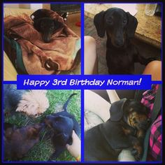 Norm's 3rd Birthday :)