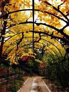 Real Jardin Botanico , Madrid - Trellised Passage with Grape Vines