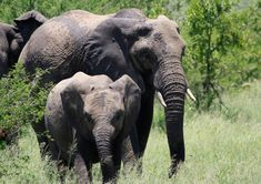 Surreal Art, Baby Elephant, Wildlife Photography, Printable Art, Wall Art Prints, Digital, Animals, Etsy, Vintage