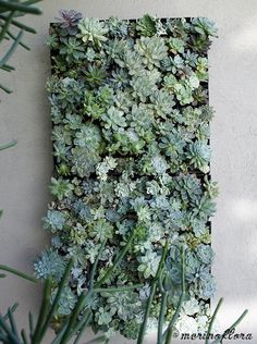 Succulent Vertical Garden Mural, by Merino Flora - Jeanette's Garden