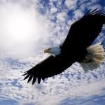And He will raise you up on eagle's wings, Bear you on the breath of dawn, Make you to shine like the sun, And hold you in the palm of His Hand.