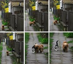 In this age of discord, a story of two unlikely friends that simply enjoy their walk together.
