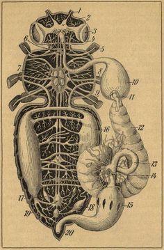 'Leben und Zucht der Honigbiene -   ein gemeinverständliches Lehrbuch über Behandlung der Bienen und   über Tätigkeit, Nutzen und Anatomie der Biene' 1922 by Oskar Krancher.