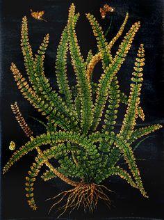 Botanical Ferns hand painted on Old Mural paper Plant Illustration, Botanical Illustration, Digital Illustration, Botanical Drawings, Botanical Prints, Ferns Garden, Symbolic Art, Midnight Garden, Ad Art