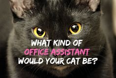 QUIZ: What Kind of Office Assistant Would Your Cat Be? https://www.petful.com/buzz/office-assistant-cat-quiz/