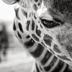 Love the g-raffe, such beautiful creatures.