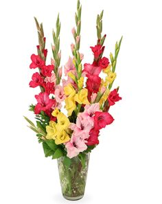 Intensity is just one of the many funeral floral arrangements available on Frazer Consultants' Tribute Store, an online flower store available on all Frazer-powered funeral home websites. #Gladiolus #Pink #Yellow #Green #FloralArrangement