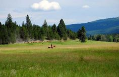 Plans for the coming summer, I always wanted to do a roundup!  Montana Working Cattle Ranch - McGinnis Meadows Cattle & Guest Ranch in Northwest Montana