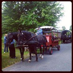 Met meerdere huifkarren tegelijk op stap. Ben je met een groot gezelschap? Niemand hoeft thuis te blijven hoor ;)   www.suikerberg.nl  #loonopzand #huifkartocht #huifkarrit #loonseendrunenseduinen #paard #paardenwagen