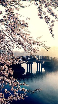 bridge across a river, blooming tree, spring images, phone background, phone wallpaper We have collected 100 spring wallpaper images to decorate your phone or desktop computer and get you into the spring mood and bring a smile to your face. Frühling Wallpaper, Spring Desktop Wallpaper, Wallpaper Fofos, Phone Screen Wallpaper, Scenery Wallpaper, Wallpaper Samsung, Travel Wallpaper, Green Wallpaper, Landscape Wallpaper