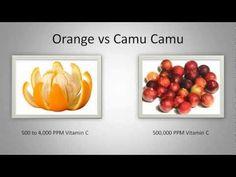 Camu camu een natuurlijke energie en immuun booster ⋆ Expand Your Awareness
