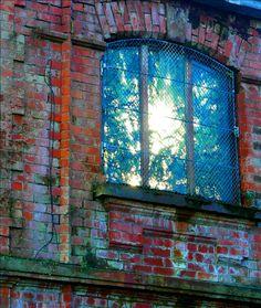 The light coming through a window of the Tropic Ravine, Botanic Park, Belfast. Botanic Park, Belfast, Windows And Doors, Gates, Rust, Teal, Tropical, World, Painting