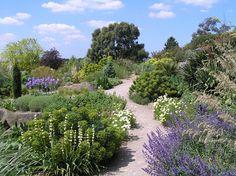 RHS Hyde Hall - photo Peter Richmond Dry Garden, Gravel Garden, Garden Paths, Garden Landscaping, Back Gardens, Outdoor Gardens, Dry Shade Plants, British Garden, Woodland Garden