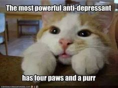"""""""The most powerful anti-depressant has four paws and a purr"""" ❤❤❤ #cats #kittens #foster #adopt"""