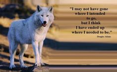 wolf art - friendship, mythical, abstract, pack, howl, howling, lobo, grey wolf, quotes, dog, wisdom beautiful, wallpaper, wolves, timber, canine, winter, wolf, lone wolf, wolfrunning, wild animal black, wolf wallpaper, majestic, wolf pack, the pack, snow, white, solitude, grey, black, arctic, canis lupus, nature, spirit