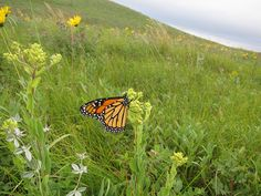 Pocket of habitat | Flickr - Photo Sharing!