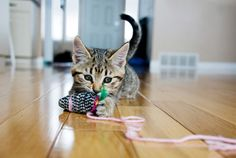 Kitty dangers: Protect your cat at home