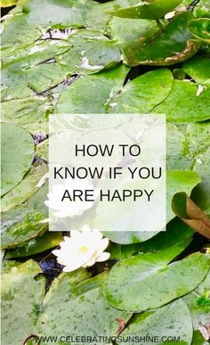 How to know if you are happy