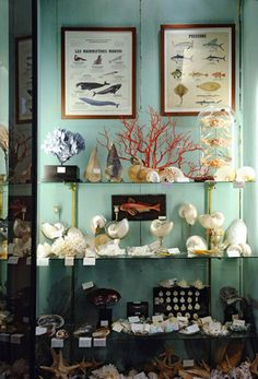 deyrolle - And this is my problem, I want to display my collections as if they were in a store. My retail past haunts my present.