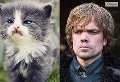 Gdyby postacie z Gry o Tron były kotami.