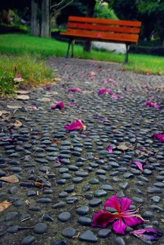 A path covered with fallen flowers.
