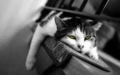 आलस आदमी का सबसे बड़ा दुश्मन( laziness is biggest enemy Laziness, Lazy, Big, Animals, Animales, Animaux, Animal, Animais
