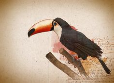 Watercolor Toucan Parrot
