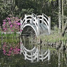 Moonbridge by Brenda Bihlear - Buildings & Architecture Bridges & Suspended Structures ( moonbridge, reflections, cypress, trees, lake, brid...