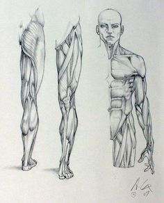 Trying to improve your art by studying anatomy? Having trouble ...