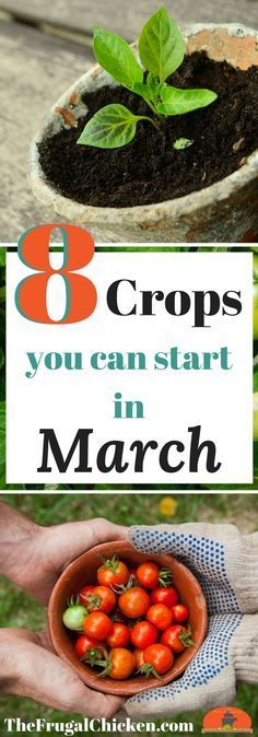 Itching to get your garden started? Here\'s 8 crops you can start in March & how to grow them! #OrganicGardening