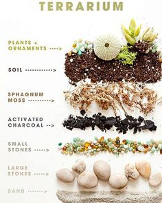Build your own terrarium! They are super fun and these mini ecosystems self regulate. Visit or blog for more on plant life and the wonder of terrariums! | ALLTHEBLOOM.com