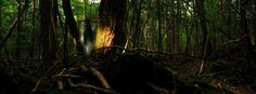 Aokigahara Forest - Mount Fuji, Japan (The Suicide Forest)