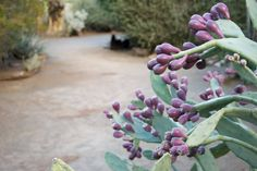 Anyone looking to plant a drought-tolerant garden should begin by researching plants suited for the temperature and approximate sun exposure where you live. Next, narrow down the vast array of choices by finding those which are aesthetically appealing (a given) and then plant said beauties in a location where there is water drainage suitable for that plant.YY