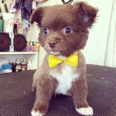 Top 5 Most Adorable Puppies you have ever seen | Pic#04