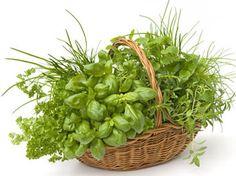 Kräuter anpflanzen auf Balkonien: So geht's!