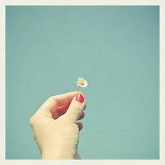 Hello Daisy (by Cassia Beck)