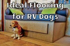 RV Dog Flooring Advice Feature Photo