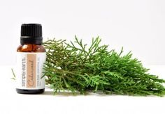 To manage greasy hair or dandruff add 9-10 drops of cedarwood essential oil to your shampoo. Massage it into your scalp and hair and let sit for 3-5 minutes and then wash with water.