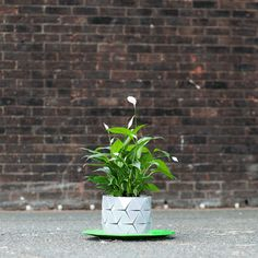 Growth by Begum Ayaskan and Bike Ayaskan | Graduate shows 2015: Royal College of Art | A plant pot with a complex origami form, which enables it to unfold and accommodate more space for roots over time.