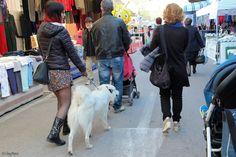bella ragazza con cane - in questo modo si può scegliere...