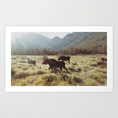 Three Meadow Moose Art Print by Kevin Russ - $16.00