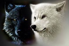Image for black and white wolf wallpaper HD Beautiful Wolves, Animals Beautiful, Cute Animals, Majestic Animals, Cherokee, White Wolf, Black And White, The One You Feed, Wolf Wallpaper