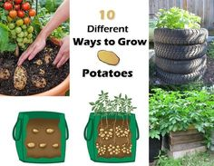 Check out the 10 ways to grow potatoes whether you have a big backyard or you own a small balcony you will find here at least one idea that will interest you.