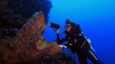 Cristina Diaz, Taxonomist: Sponge Biology on Vimeo from ShapeOfLife.org