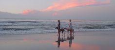Greyhound Crossroads - Beach Bound Hounds Sun, Beach and Greyhounds...what more…