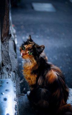 魅力的な猫