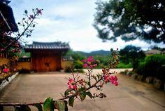 Korea ❤ #andong #hahoevillage #hahoe #korea #southkorea #traditional #automn #inlove #thankful #flower #lovethispicture #nikon #D3300 #wanttogoback #obsessed #beautiful #bestholiday #travel #travelgram #traveller #traveler #travelphotography